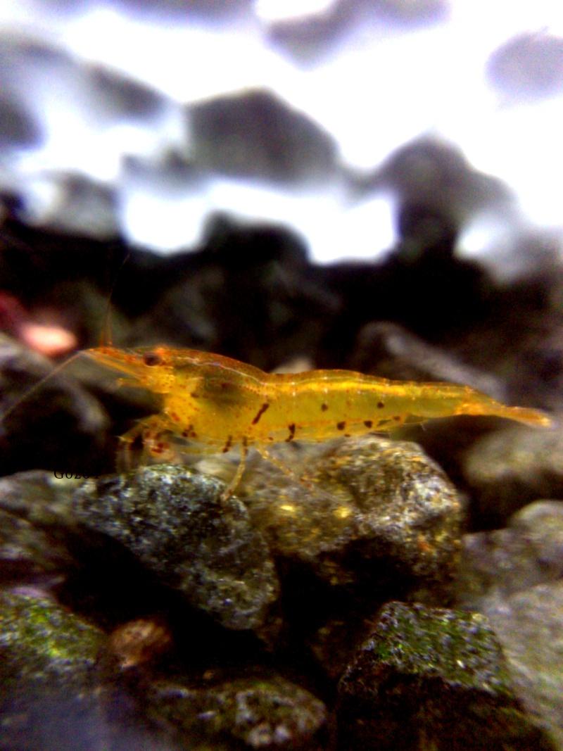Gozgull Shrimp's - Page 9 Img_2012