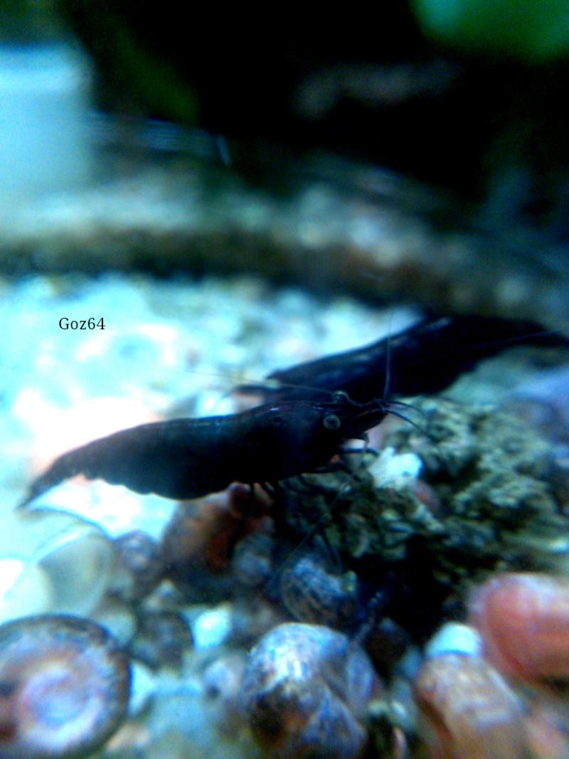 Gozgull Shrimp's - Page 9 Img_2014