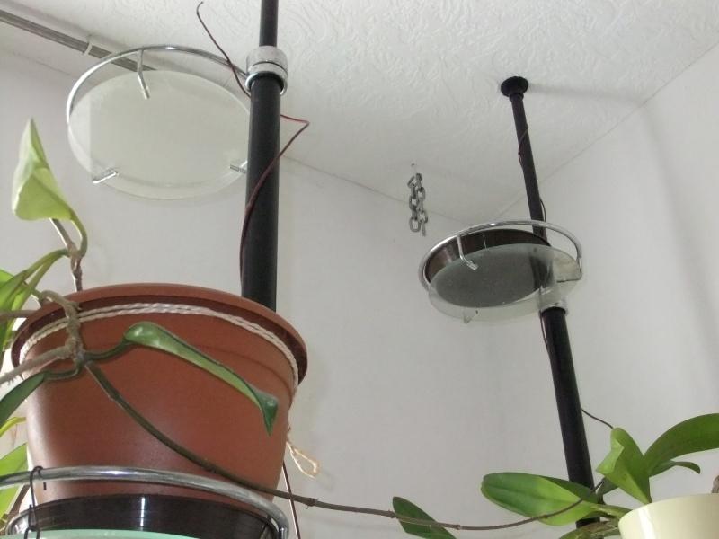 Hoyas sind sehr eigenständig und erfindungsreich Dscf2335
