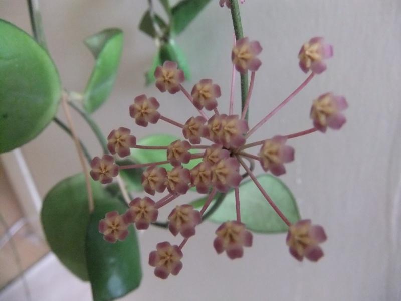 Blüten 2016 H_comp12