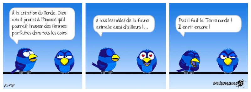 Quelques Birds ? Bird-d10