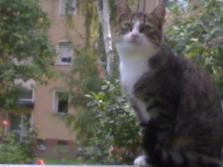 Haben die Katzen endlich verstanden, als ich ihnen sagte, sucht euch ein neues Zuhause? 13092010