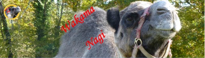 Wakama Nagi