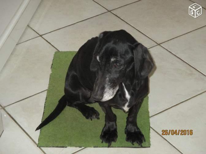 Don de chien sur Le Bon Coin E15e1e10