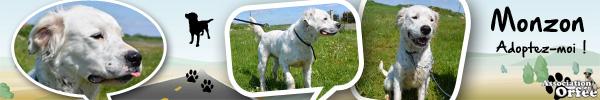 SISKA croisée labrador née en 01/07/2008 adoptée par FRANCINE  ( 79 ) Monzon10