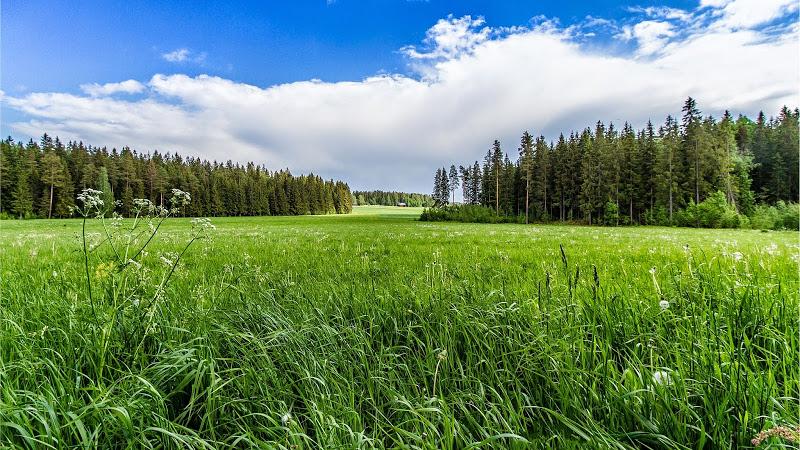 Лесная поляна 1701910