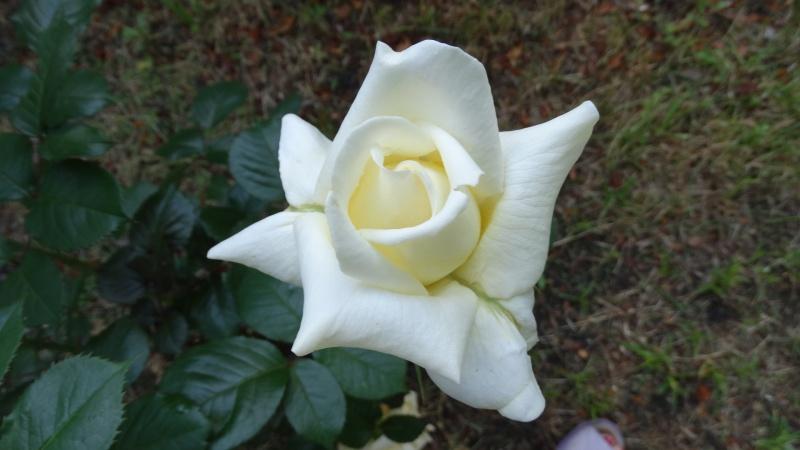 qu`avez vous comme fleur chez vous en ce moment ? Dsc03819