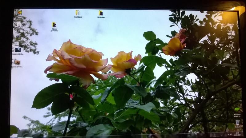 qu`avez vous comme fleur chez vous en ce moment ? Wp_20124