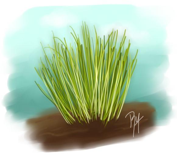 Mis dibujos en Sai ~ Arbust10