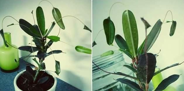 J'essaie de trouver le nom de cette plante mais en vain. 89859310