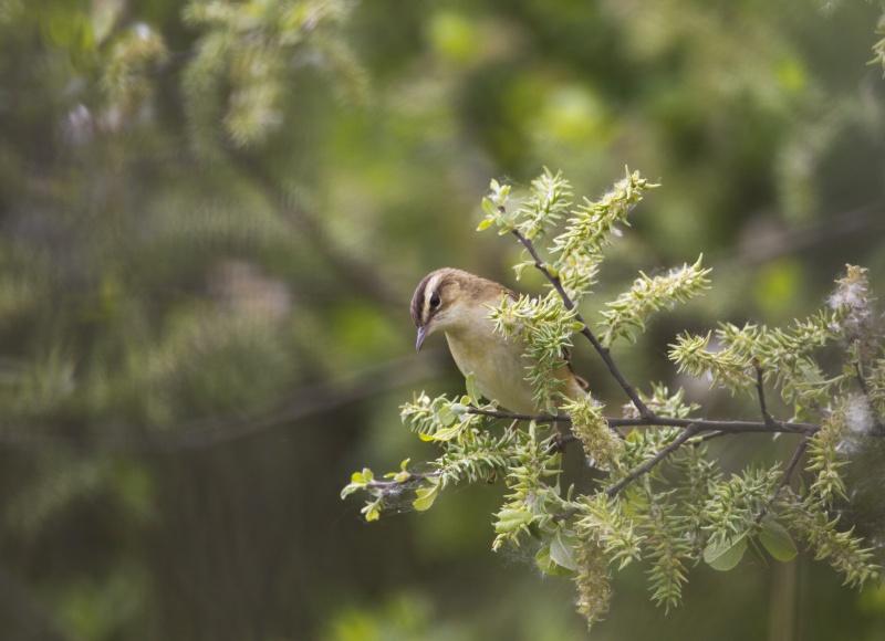 oiseau aquatique 1q6a6510