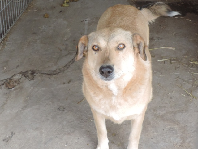 BAILEYS, née en 2011, sauvée de l'équarrissage - parrainée par Nathalie -SOS-R-SC - Page 2 Bailey17