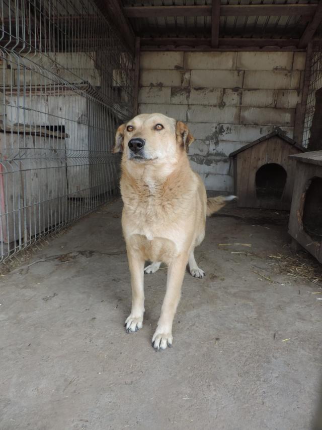 BAILEYS, née en 2011, sauvée de l'équarrissage - parrainée par Nathalie -SOS-R-SC - Page 2 Bailey19