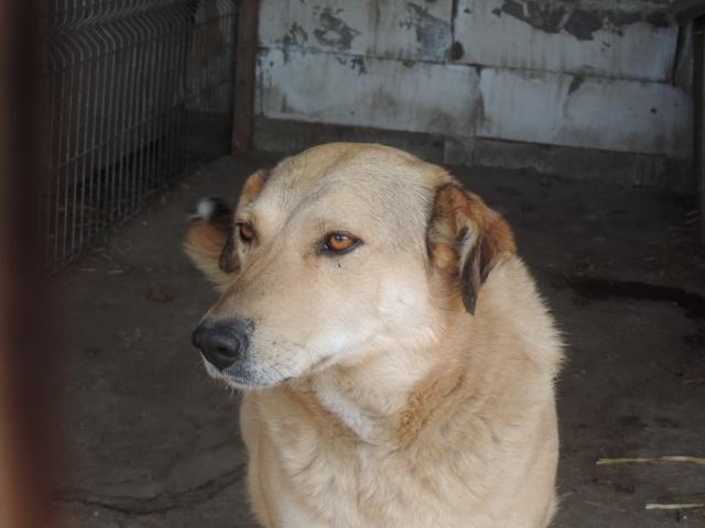 BAILEYS, née en 2011, sauvée de l'équarrissage - parrainée par Nathalie -SOS-R-SC - Page 2 Bailey21