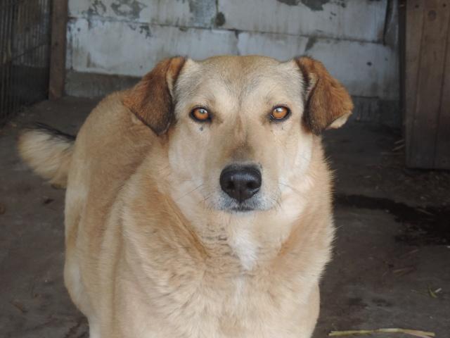 BAILEYS, née en 2011, sauvée de l'équarrissage - parrainée par Nathalie -SOS-R-SC - Page 2 Bailey24