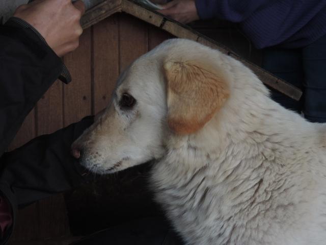 BALANUCH, mâle croisé berger sauvé de Pallady, né en 2009 parrainé par Nathalie Gamblin-Gage Coeur  Myri_Bonnie-SC-R-SOS- Balanu11