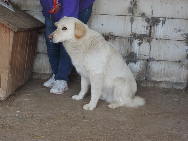 BALANUCH, mâle croisé berger sauvé de Pallady, né en 2009 parrainé par Nathalie G. -Gage Coeur  Myri_Bonnie-SC-R-SOS- Balanu12