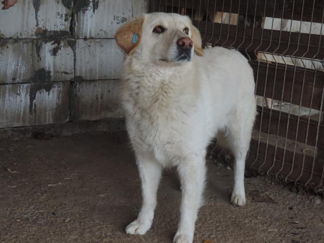 BALANUCH, mâle croisé berger sauvé de Pallady, né en 2009 parrainé par Nathalie G. -Gage Coeur  Myri_Bonnie-SC-R-SOS- Balanu17