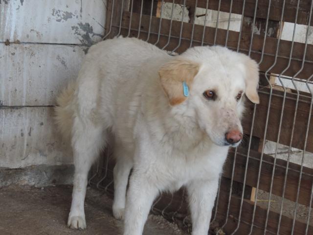 BALANUCH, mâle croisé berger sauvé de Pallady, né en 2009 parrainé par Nathalie G. -Gage Coeur  Myri_Bonnie-SC-R-SOS- Balanu21