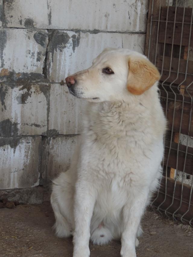 BALANUCH, mâle croisé berger sauvé de Pallady, né en 2009 parrainé par Nathalie Gamblin-Gage Coeur  Myri_Bonnie-SC-R-SOS- Balanu22