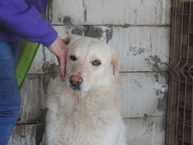 BALANUCH, mâle croisé berger sauvé de Pallady, né en 2009 parrainé par Nathalie Gamblin-Gage Coeur  Myri_Bonnie-SC-R-SOS- Balanu23