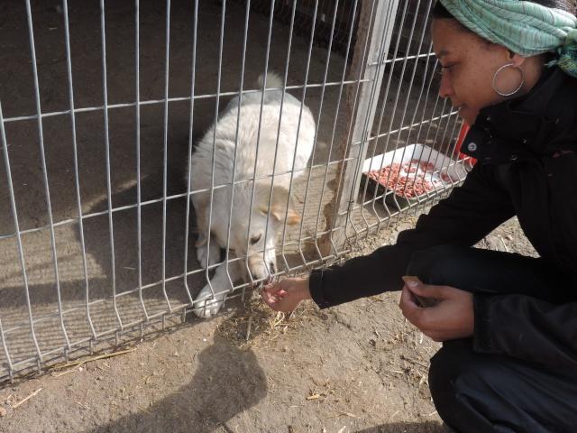 BALANUCH, mâle croisé berger sauvé de Pallady, né en 2009 parrainé par Nathalie G. -Gage Coeur  Myri_Bonnie-SC-R-SOS- Balanu24