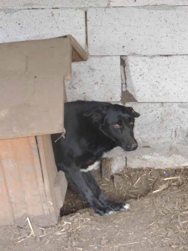 HOPE, née en 2008, croisé labrador parrainée par Nathalie Gamblin- R - VV-SC-SOS-FB - LBC - - Page 2 Hoep10