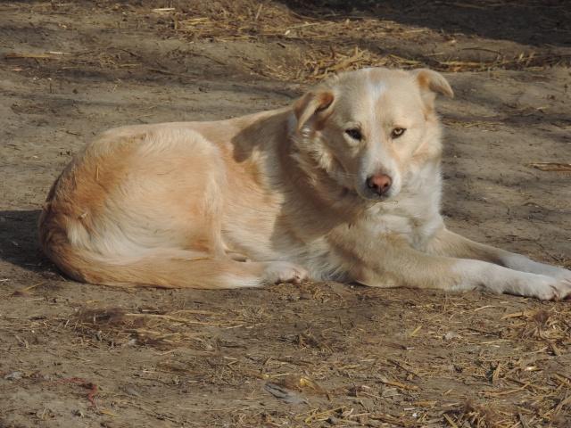 Marko, né en 2010, type labrador -PARRAINE PAR MARYLENE -R-FB-SOS-LBC-SC- - Page 2 Marko10