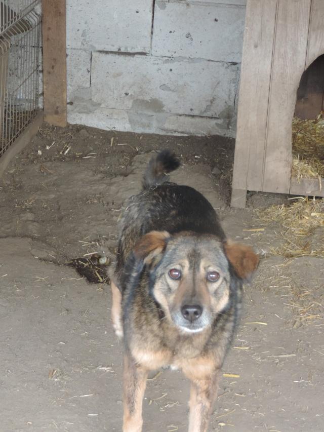 NENIA - Femelle - née en 2009   -Parrainée par Yemtsi et Nanou R-SOS-SC - Page 2 Nenia10