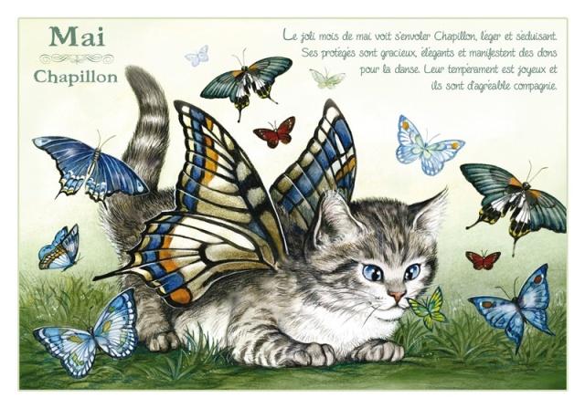 Chats Enchantés Chat_m11