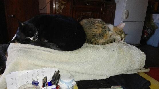 DUCHESSE - chatte femelle, née 2011/2012, borgne - (PASCANI) - adoptée par Chantal Pascal (dpt 63) - Page 5 14618610