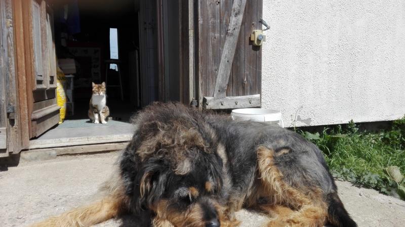 DUCHESSE - chatte femelle, née 2011/2012, borgne - (PASCANI) - adoptée par Chantal Pascal (dpt 63) - Page 5 Img_2023
