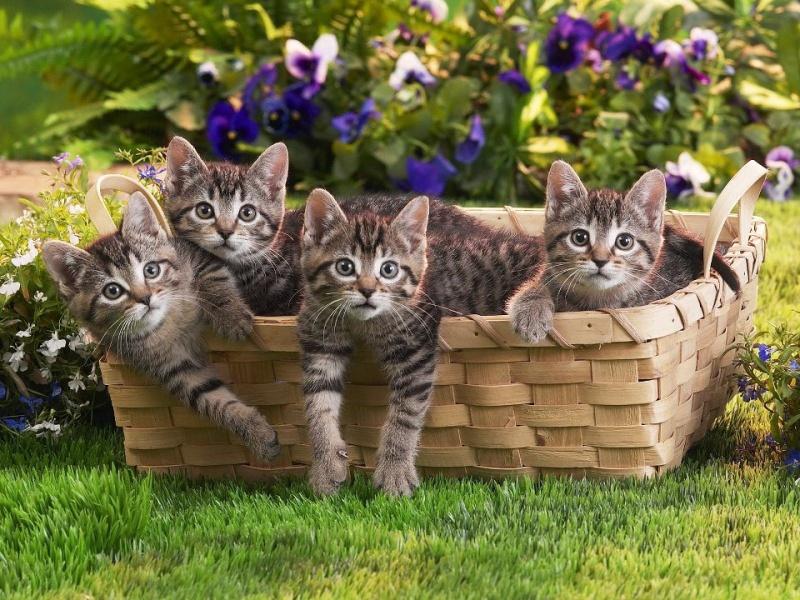 Les chats Cha_111
