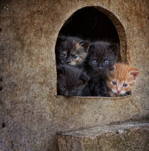 Les chats - Page 38 Cha_610
