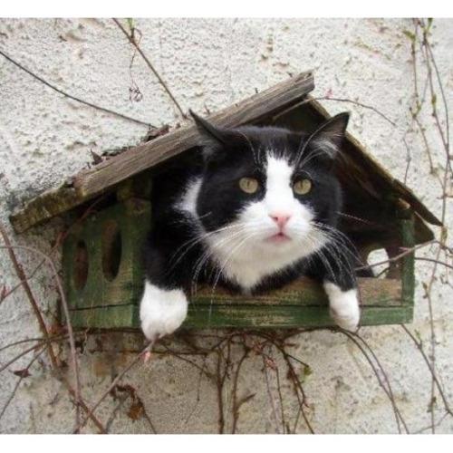 Les chats - Page 4 Cha_r13