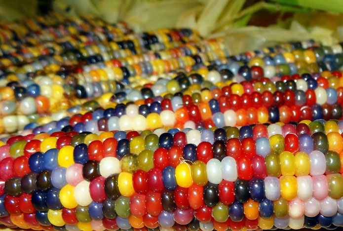 tout est multicolore Cou_j10