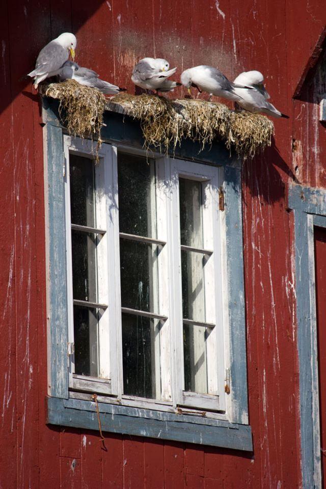 Des fenêtres d'hier et d'aujourd'hui. - Page 40 Fen_0011