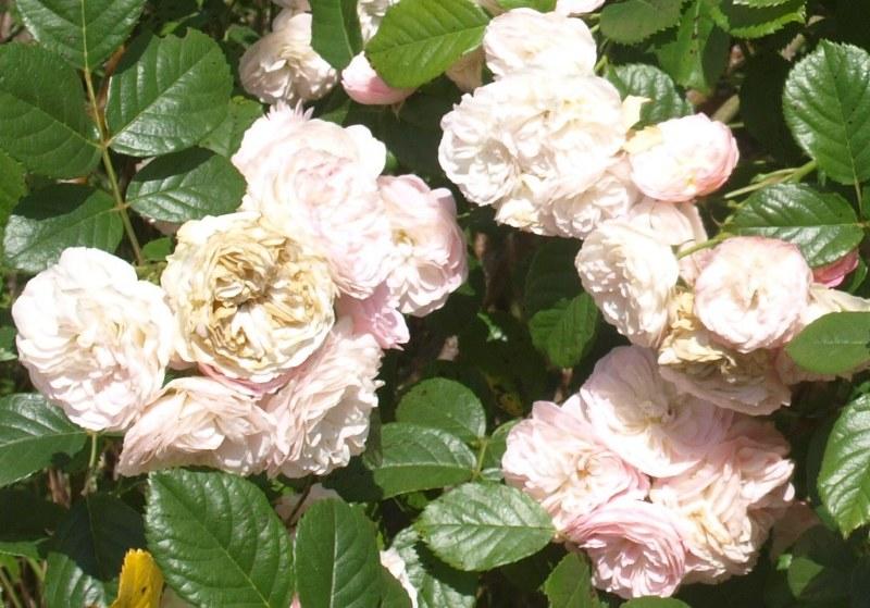 Bouquet parfait (Lens - 1989) - Page 2 Bouque12