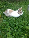 un lapin...?  - Page 5 12814011