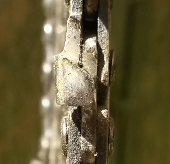 Quelle chaine pour abbattre de l'acacia mort sur pied ? 20160417