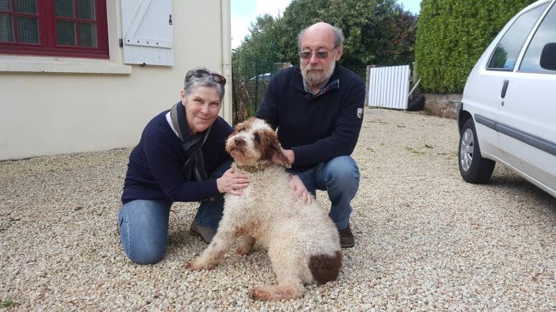 Boggy - chien d'eau Espagnol - 2 ans - Adopté 13041210