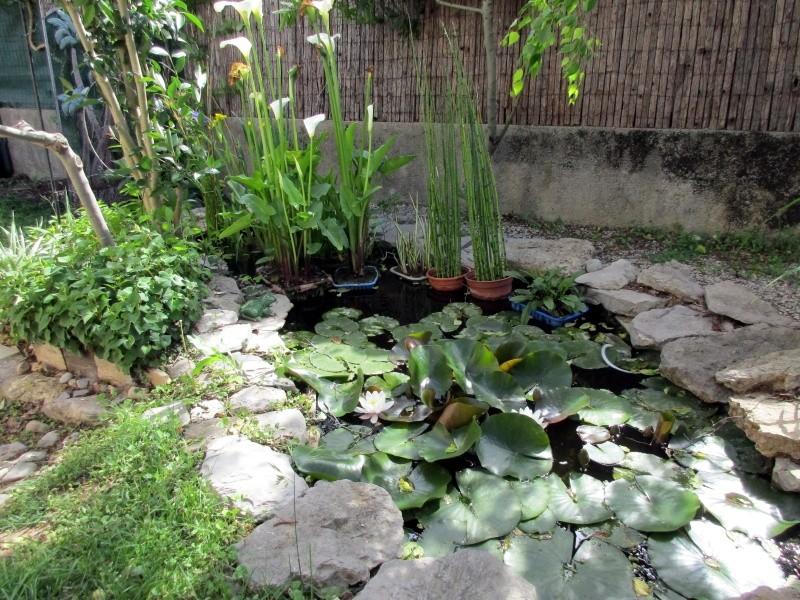 trefle autour du bassin 01212