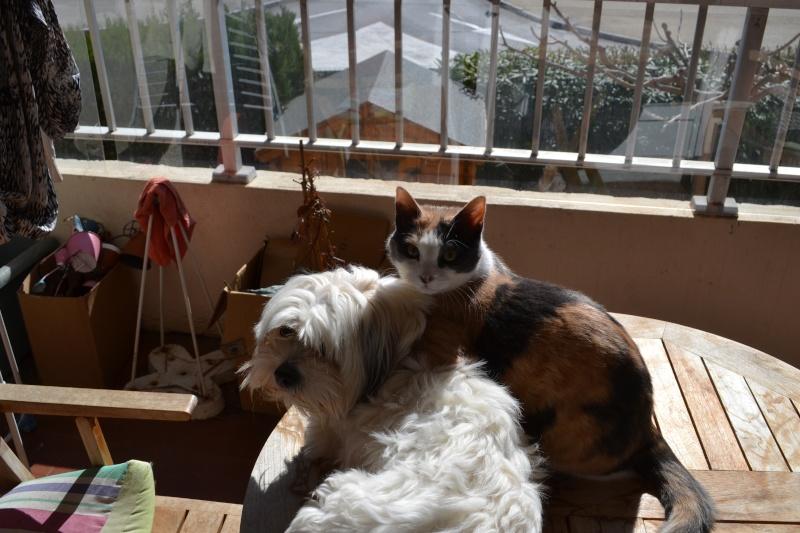 Nos chats dans tous leurs états  . Dsc_0310