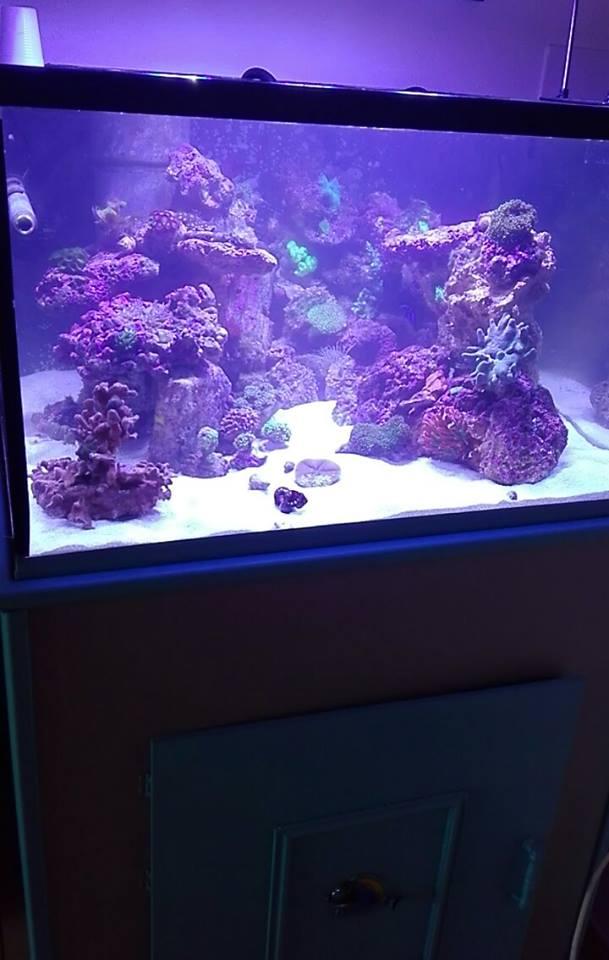 Merow reef  - Page 9 Aqua_010