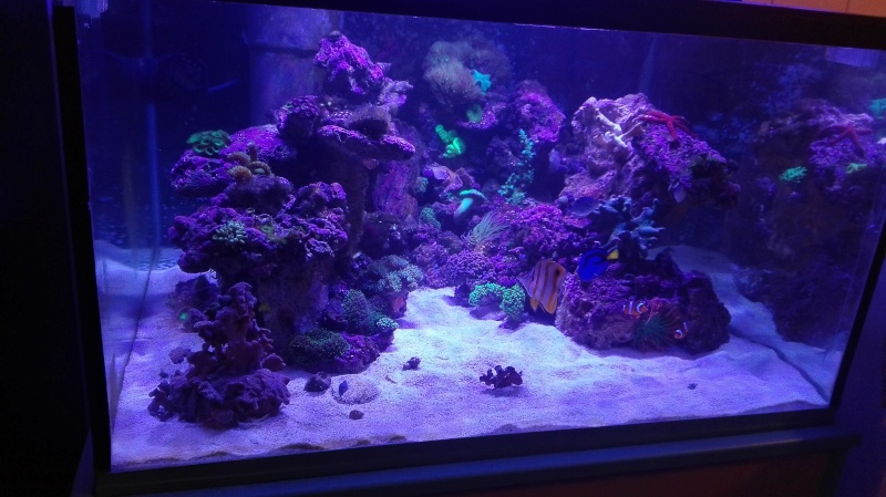 Merow reef  - Page 10 Img_2018