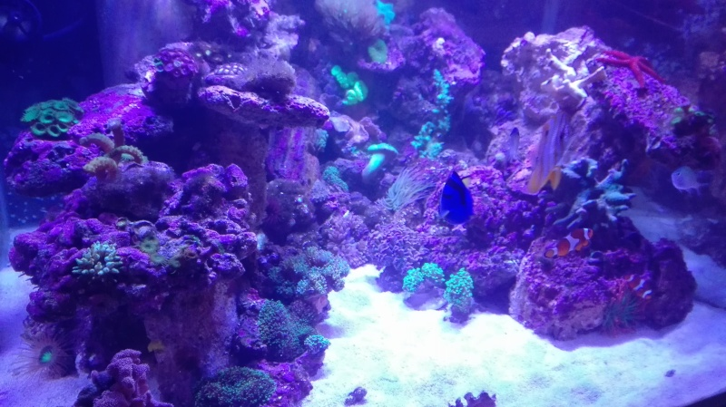 Merow reef  - Page 10 Img_2019