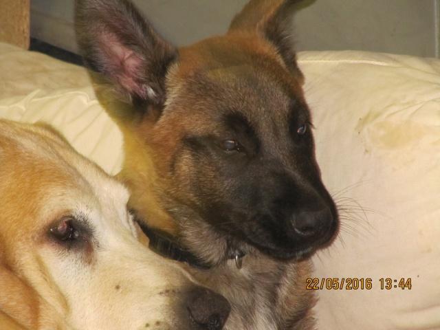 2chiots 3mois males a l adoption urgent Img_3313