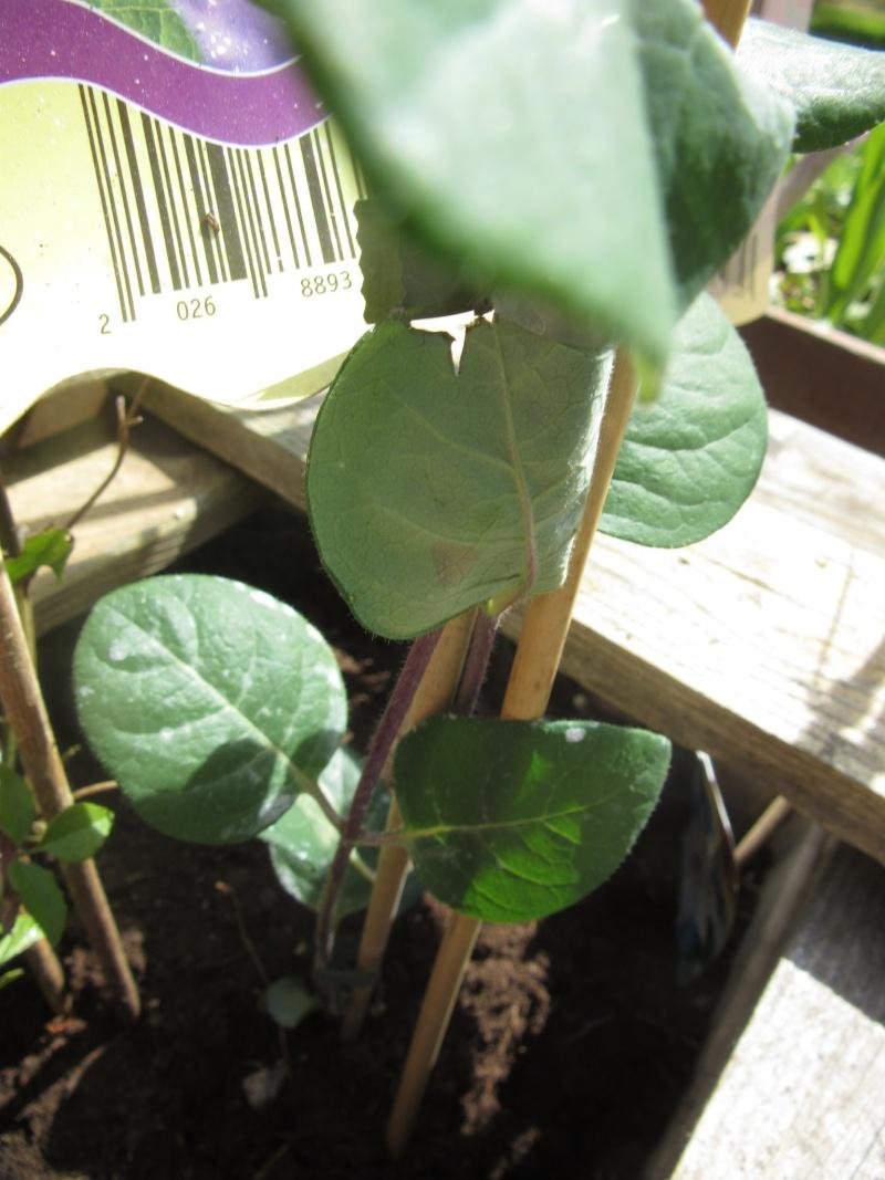Plante inconnue?  Img_3413