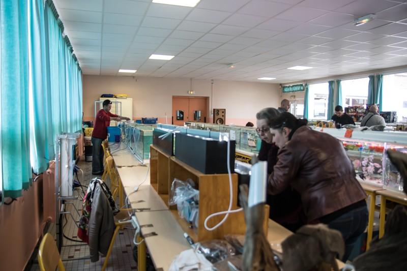 2ème bourse aux poissons de l'association Lille Aquariophile Club - Page 2 24042079