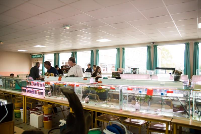 2ème bourse aux poissons de l'association Lille Aquariophile Club - Page 2 24042082